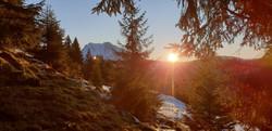 Wald mit Sonneneinstrahlung.jpg
