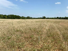 Caleb Ranch Open Field.jpg