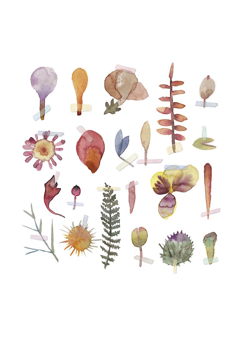 a3 susene kvetiny s lepitkami bez pozadi