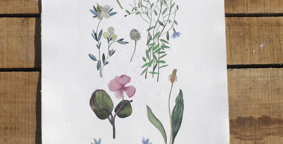 Herbarium 1
