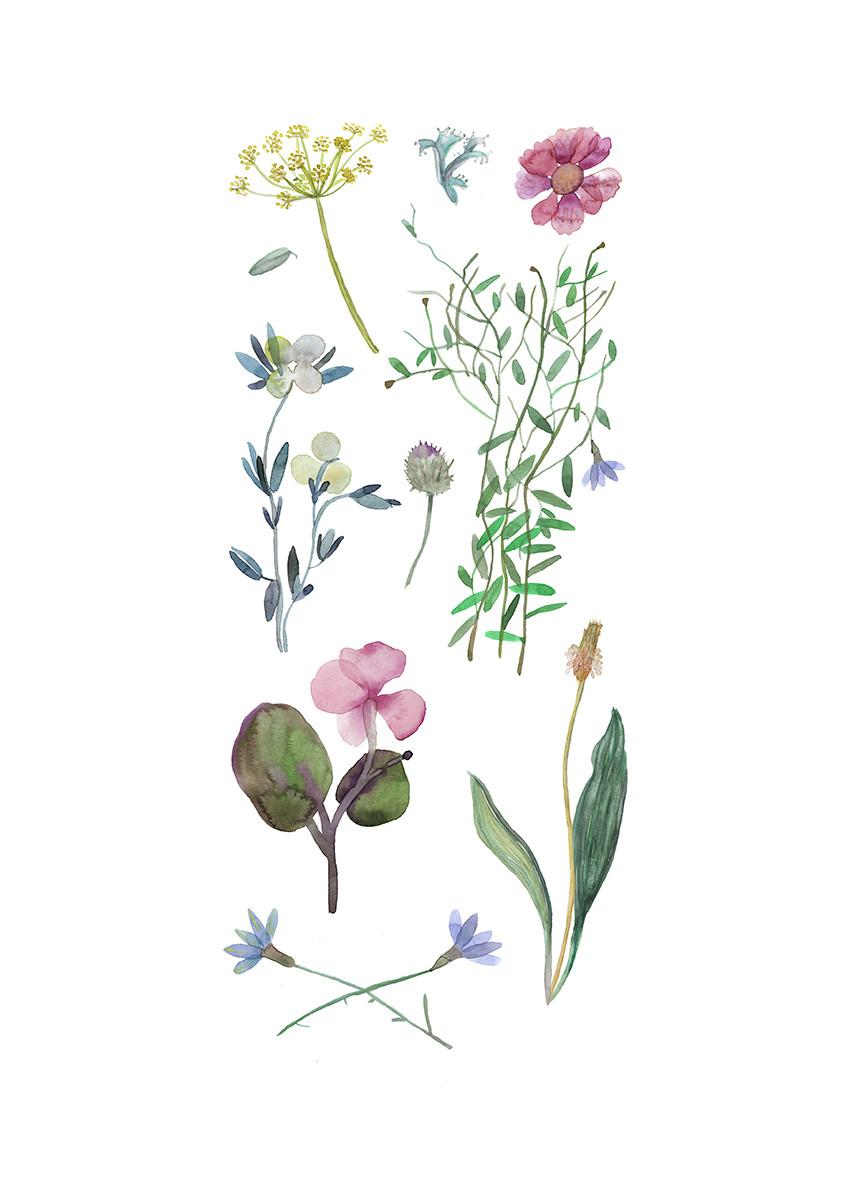 herbarium opravdu A3 FIN.jpg