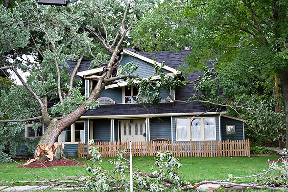 storm-tree-house.jpg