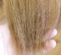 【チリチリの髪はもう嫌だ!】    髪質改善美容師がその原因と対処法を徹底解説!