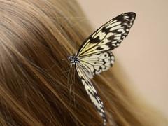 春の花粉や粉塵から髪を保護してください 広島 髪質改善