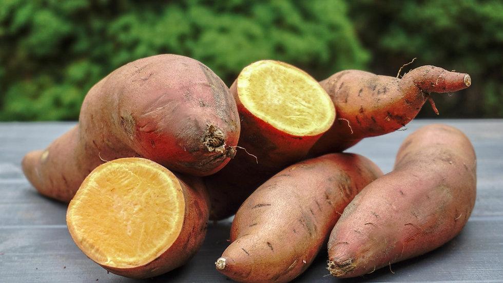 Narancs színű édesburgonya - kezeletlen 1kg
