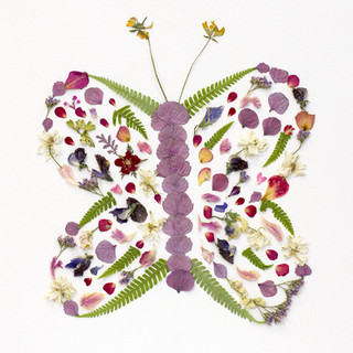 Nell - Butterfly (Low Res).jpg