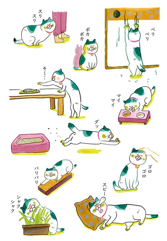 猫の日課.jpg