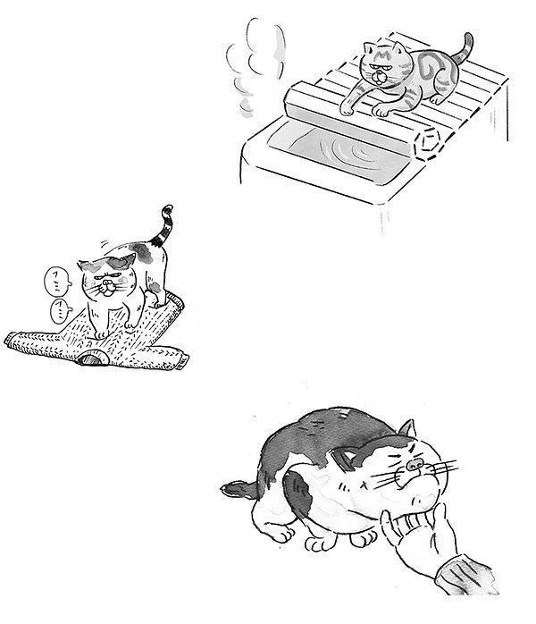 猫のしぐさ.jpg