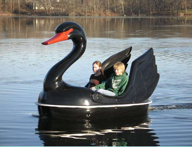 Swan pedal boat
