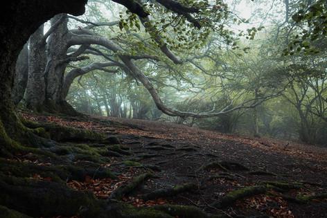 """""""Forêt originelle"""""""