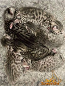 Huddle of baby kittens