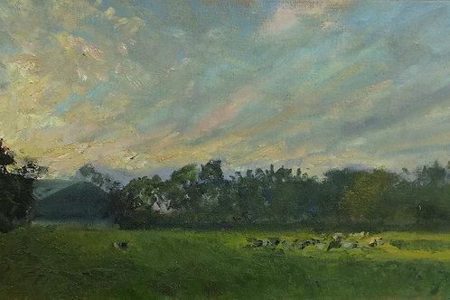 Heifers At Sunset