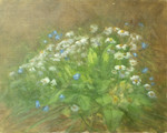 Daisies and forget me nots