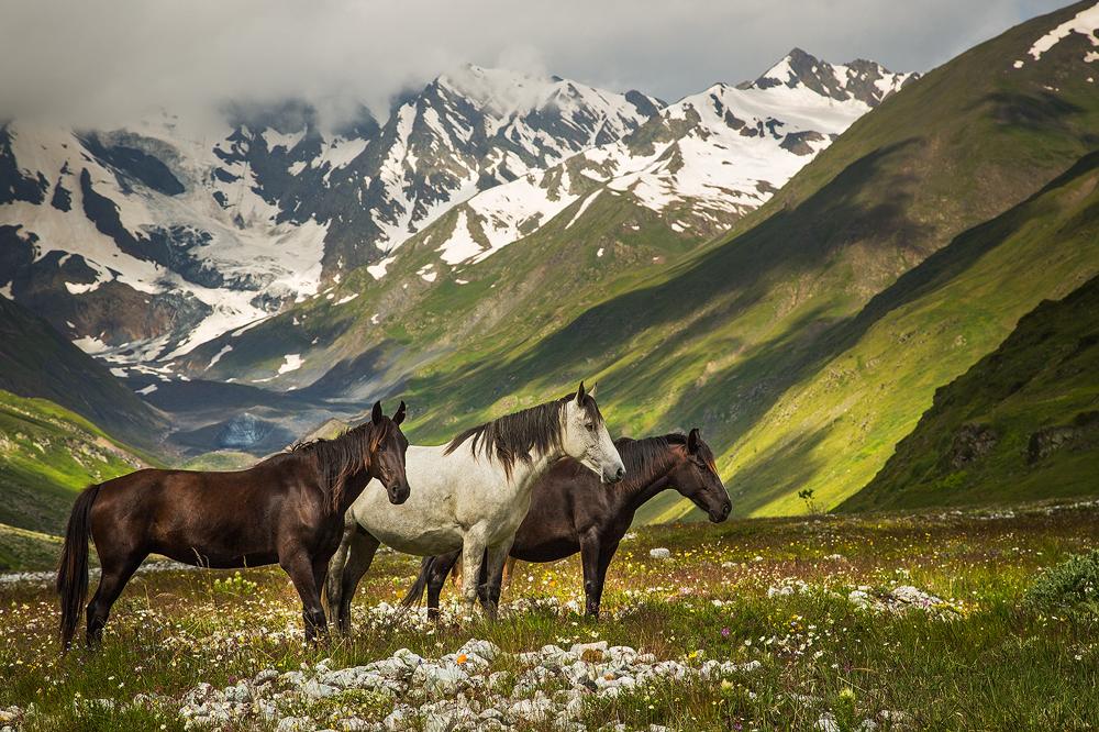 Лошади Кавказа