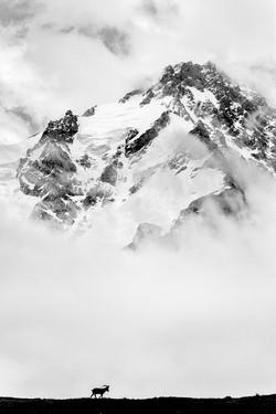 Высоко в туманных горах