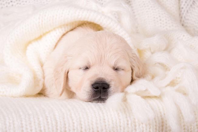 передержка собак королёв
