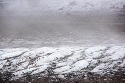 Стадо туров пересекает ледник
