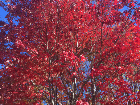 New England, (Central) Canada & New York – in the Fall