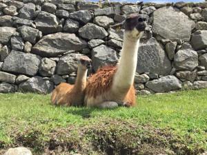 Peru Booking Details