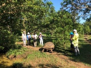 The giant land tortoise of Galapagos