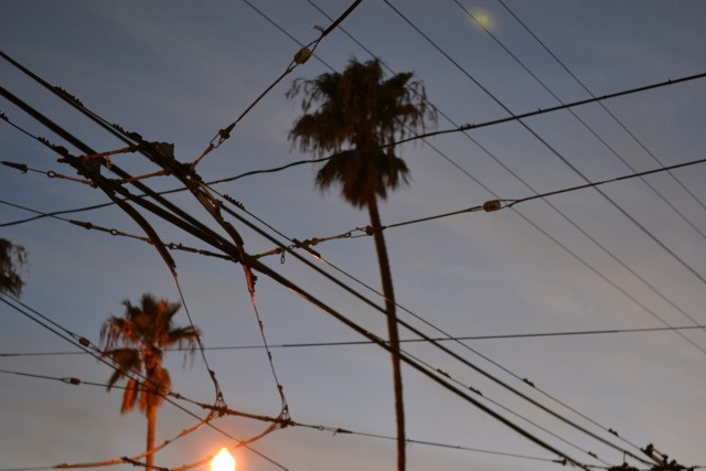 MUNI Lines & Palm Trees at 16th & Mission