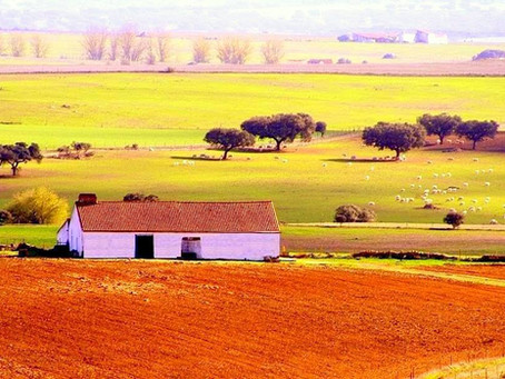 Central Alentejo's cycling and walking tours
