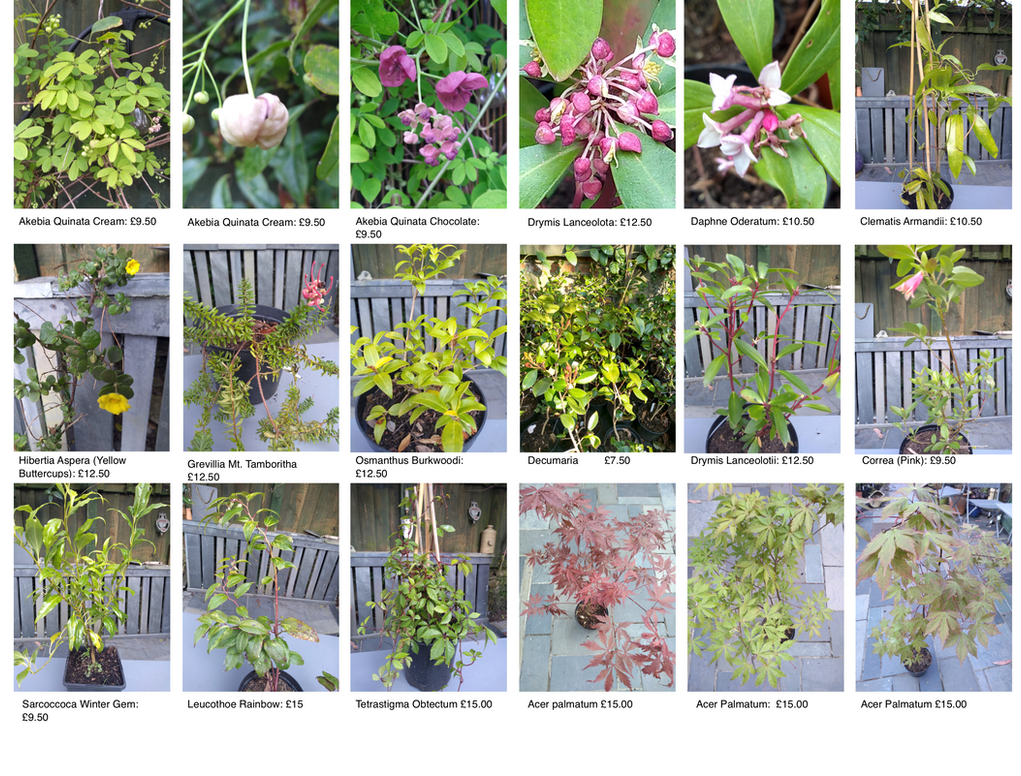 Plant Pages for Wix Page 1.png