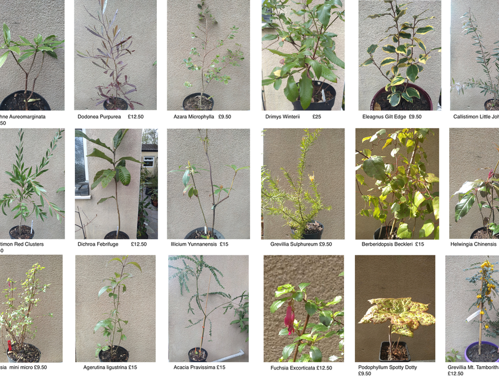 Plant Page For Wix Page 3.png
