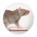 ratos.png
