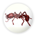 formigas.png