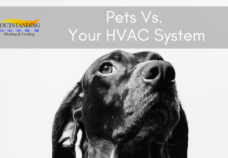 Pets vs. Your HVAC System