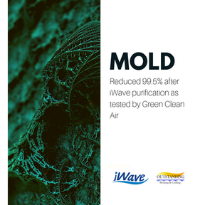 mold ig.png