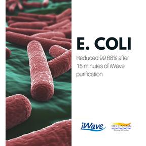 e coli IG.png
