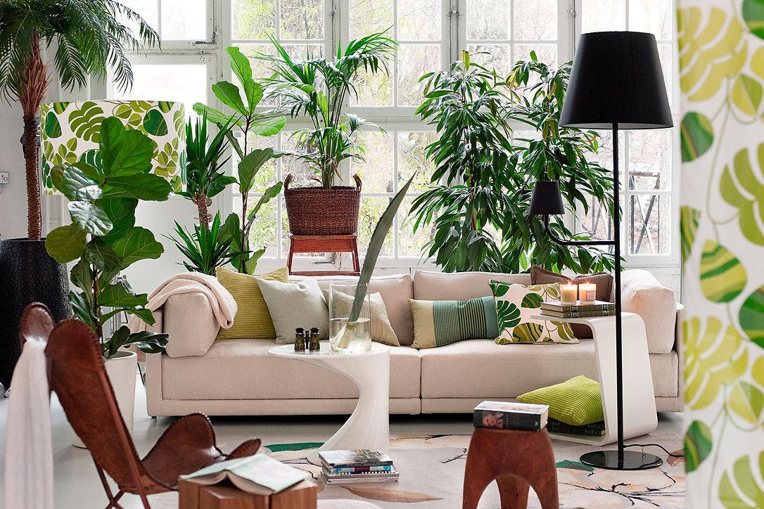 home plant.jpg