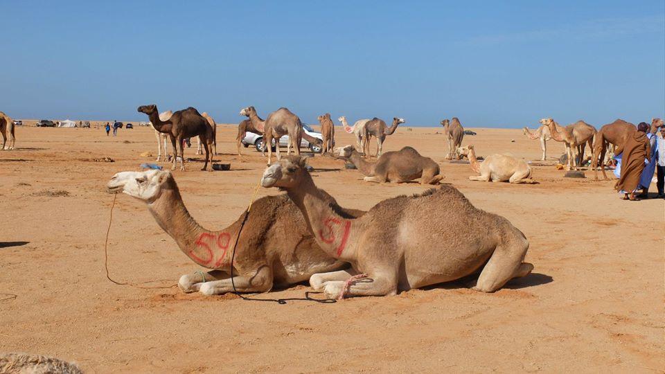 Tous les nomades ont le désert au cœur. Habibollah Dlimi plus que d'autres….