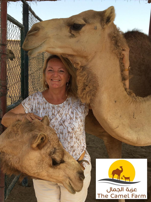 Les dromadaires de Viviane Paturel, responsable de la Camel Farm à Dubaï aux Emirats Arabe Unis!