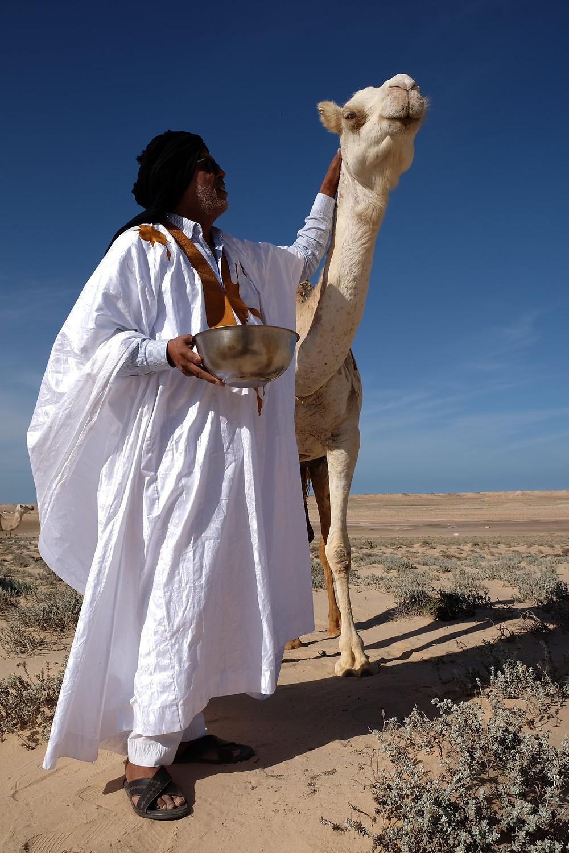 Huit fois Champion National de courses de chameaux. Producteur de cette denrée noble qu'est le lait de chamelle. Producteur de Soirées Hassani. Pour la dernière semaine du Ramadan, il réunira encore les Dakhilis pour les soirées de culture nomade. Rien ne l'arrête... Habibollah Dlimi, le fou du désert.