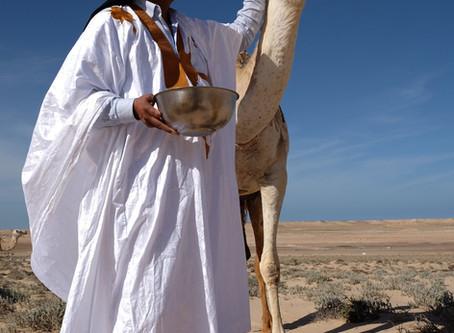 HABIBOULLAH DLIMI, L'AMOUREUX FOU DU DESERT / MAROC