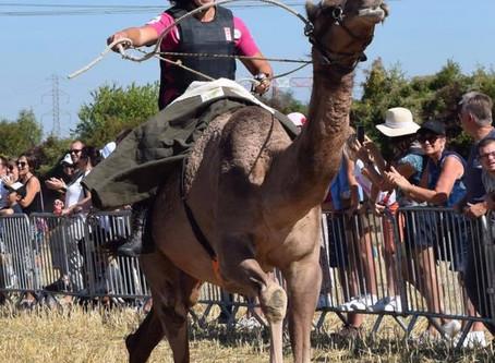 DROMAS ET SES JOCKEYS DE FRANCE /HIS CAMEL JOCKEYS!