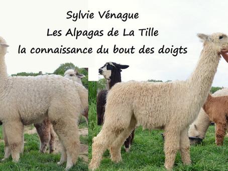 SYLVIE VENAGUE : LES ALPAGAS DE LA TILLE EN FRANCE / ALPACAS OF TILLE IN FRANCE