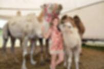 les chameaux de Sophie Mazelier et  William Kerwich