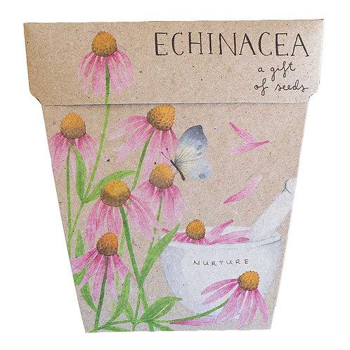 Echinacea Gift of Seed