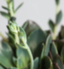 Plants, biophilia, biophilic design, service, London