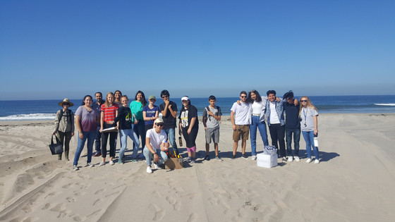 """Are volunteer beach cleanups effective?"" A student designed experiment!"