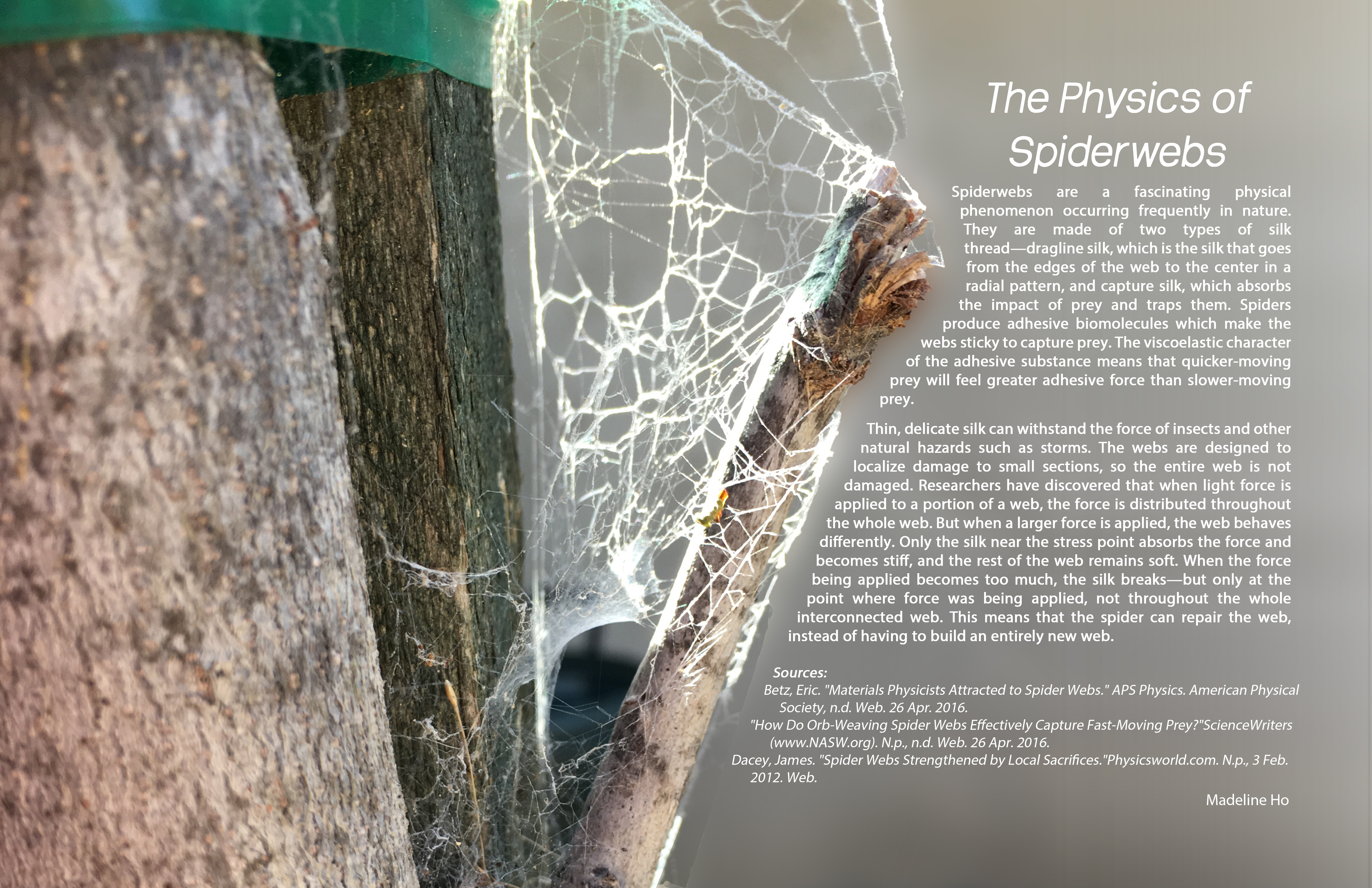 SpiderwebPoster.jpg
