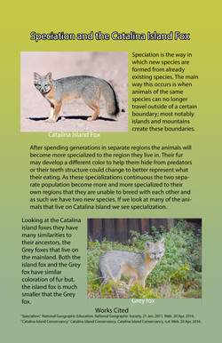 Speciation-and-the-Catalina-Island-Fox.jpg