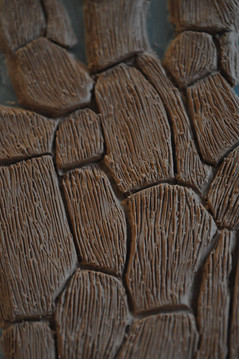 Bark Skin Texture