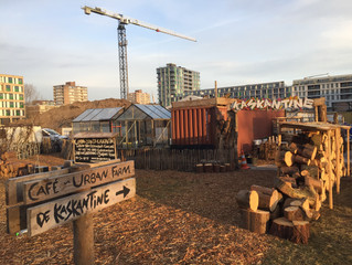 StadsOogst joins KasKantine to set up new urban farm in Amsterdam New West