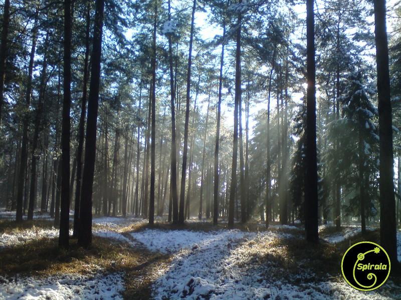 snezni gozd.jpg