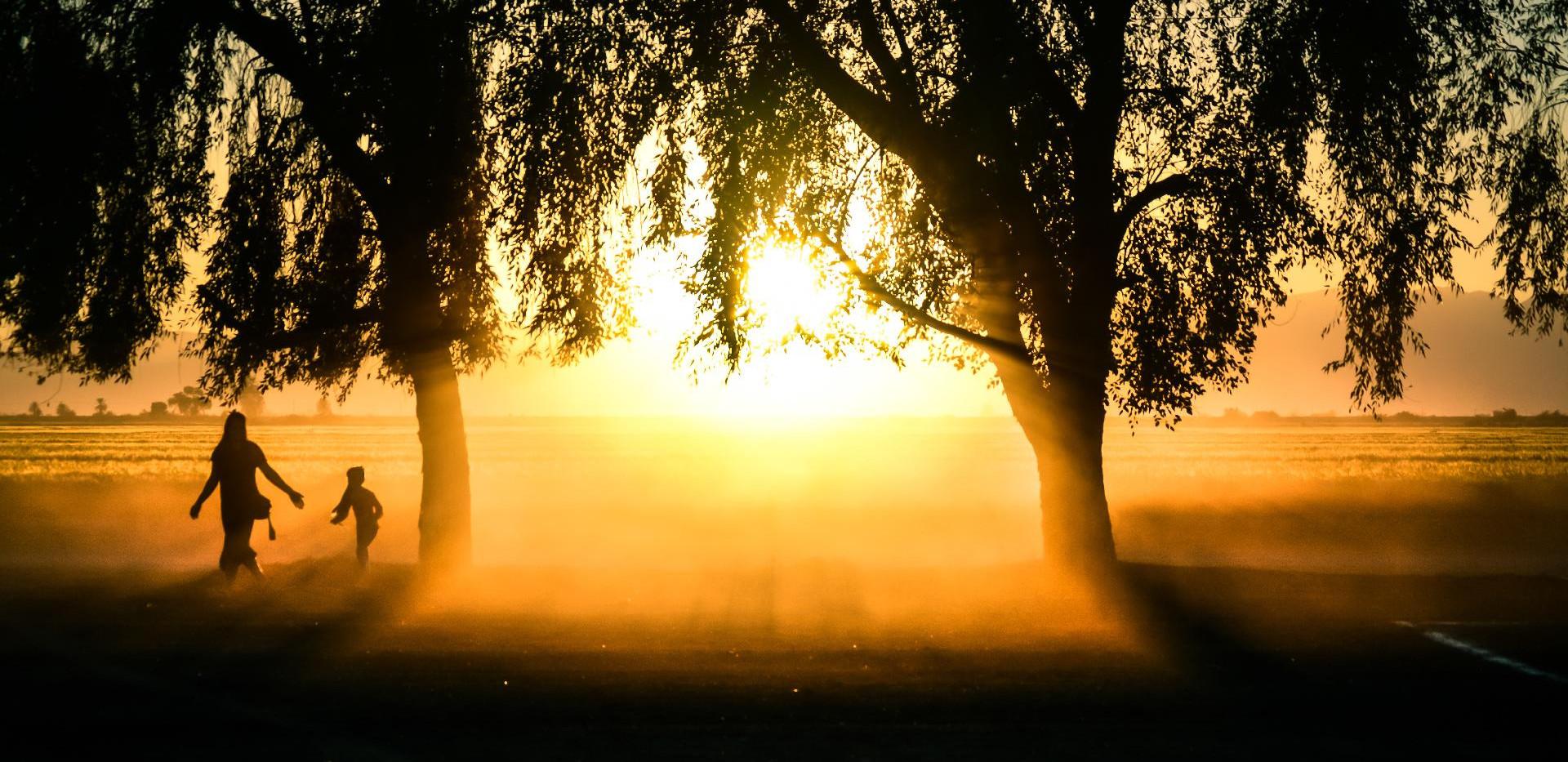 jumpstory-ZED trees sun-071622.jpg